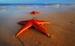 Rise in reports of Starfish in the bedroom